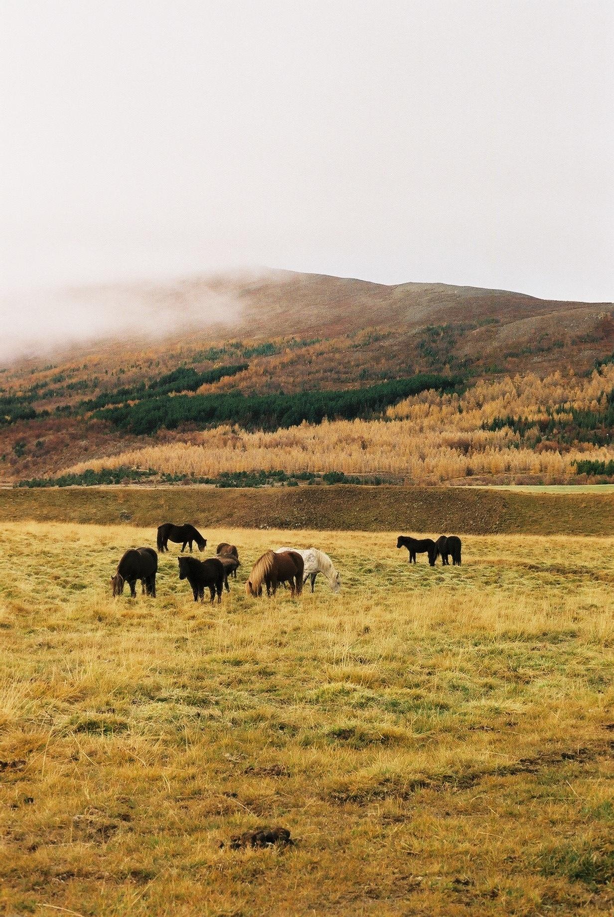 iceland (autumn), 2013